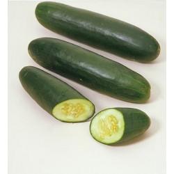 Pepino ensalada unid